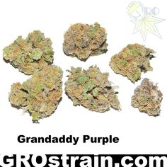 GROspot.com Grandaddy Purple marijuana strain.