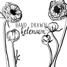 Ink Drawing Helenium Flower Clipart Flowers Clip Art Digital Clipart Flower Vintage Style Floral Clipart Scrapbooking
