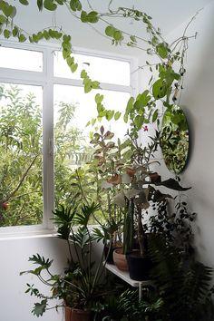 Juliana de Lasse's indoor jungle!