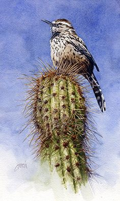 Cactus Wren by Joe Garcia Watercolor ~ 10.5 x 6.5