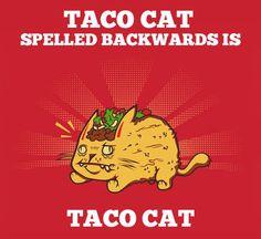 Taco Cat…