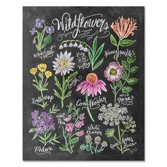 Wildflower Field Guide - Print & Canvas