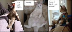 Cat Chat!