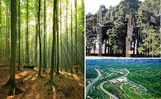 urban forest - Google-søk