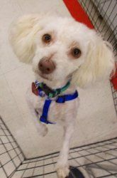 """Using Petfinder.com, we located this cutie named """"Carrie"""" for adoption near D.C."""