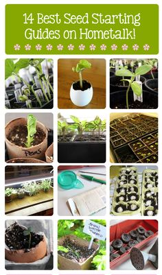14 best seed starting guides on Hometalk!