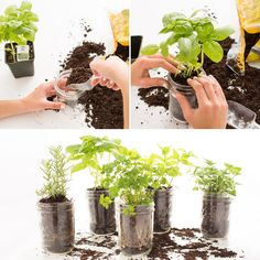 Fill a mason jar with soil and herbs for your vertical garden.