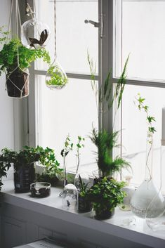 Foliage placed in pretty green bottles is such a simple but effective way to add interest to a plain windowsill and bring a sense of calm to a room