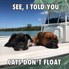Boxer – Energetic and Funny Boxer Dogs Facts, Dog Facts, Boxer Dog Quotes, Boxer Memes, Dog Memes, Boxer And Baby, Boxer Love, Funny Dogs, Funny Animals