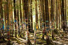 Buryat religious ribbons. Buryats, the native ethnic group in Buryatiya, Russia put these colorful ribbons on trees as a worshiping ritual.