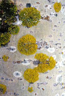 Webkasvio Colours, Plants, Plant, Planets