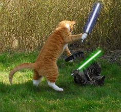 Jedi Cats would hab fun at #scifipawty