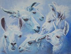 Welcome to Gemini Mini Llamas - Gemini Farms