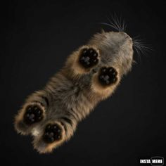 A cat: view from below