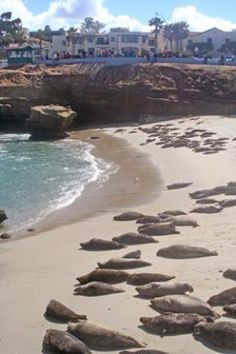 La Jolla cove. Great place if you want to see seals on the beach.