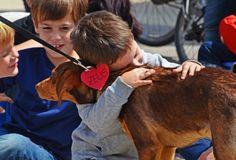 2º desfile solidario de perros abandonados