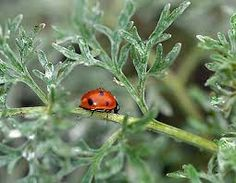 Ladybug Angry About Being Born Into A Subarctic Climate: She Blames Darwin mouthfrog.com