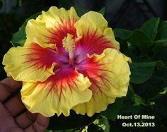 Heart of Mine Hibiscus