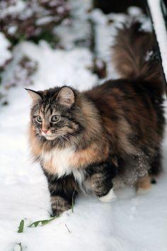 Richtig ausgestattet für die Kälte. Tolles Winterfell! Hübsche Katze.