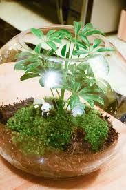 panda terrarium
