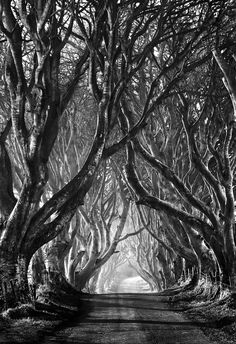 Stephen Emerson, Ireland: This group of trees known locally as 'the dark hedges' are thought to be around 300 years old. They are reputedly haunted by a 'Grey lady' and form an arc over the road.