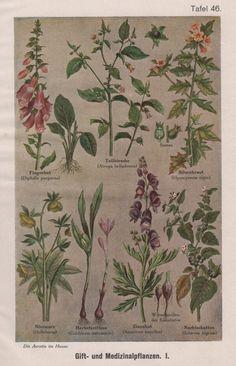 1910 Poisonous & Medicinal Plants Antique Botanical by Craftissimo