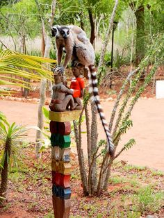 mother & baby ring-tailed #lemurs on a tribal funerary totem post, #Madagascar