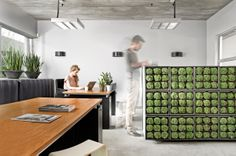Green wall. Indoor & Outdoor www.karoo-dmdepot.be