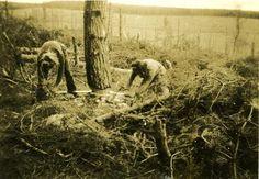 Timber Jills felling trees  Garlogie or Corsindae
