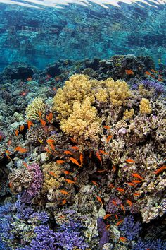 A Burst Of Life And Color - Red Sea Coral