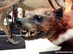 Natural History Museum - Dublin (Ireland)