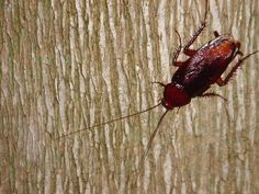 Cockroach in the backi, you cannot get rid of them...     How to mouse control for the individual.