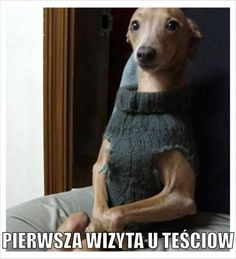 When you go to a friends house for the first time - You Had One JobYou Had One Job Funny Tom, Funny Cats, Funny Animals, Funny Jokes, Blonde Jokes, You Had One Job, Music Memes, Italian Greyhound, Jolie Photo