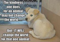 Don't shop... adopt!