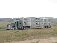 Biggest Cattle Truck.