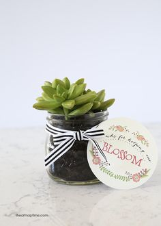 Succulent plant gift idea for Teacher Appreciation and Mother's Day with free printable.  Love this!