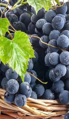 Nadire Atas on Wine Making From Grapes All Fruits, Fresh Fruits And Vegetables, Fruit And Veg, Soy Milk Nutrition, Photo Fruit, Vegetable Pictures, Fruits Photos, Vides, Fruit Photography