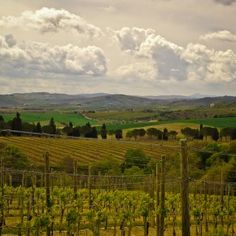 Beautiful vineyards and hills in Umbria