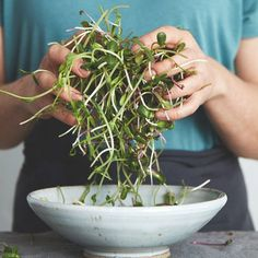 Groddar och skott - så lyckas du! | ICA Buffé Swedish Cuisine, Raw Food Recipes, Healthy Recipes, 400 Calorie Meals, Alfa Alfa, Wheat Grass, Fodmap Diet, Food Facts, Growing Vegetables