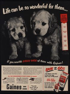 Kennel Caralina´s: Pennut Puppies