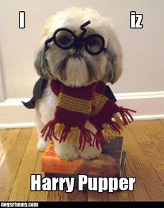 Harry Pupper - puppy dog in Harry Potter custome :-) very cute !