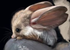 The Jerboa..Look at those over-sized ears! This little animal is a cross between a mouse and a rabbit, and it is totally adorable.