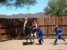 Riding an Ostrich on the Garden Route in South Africa