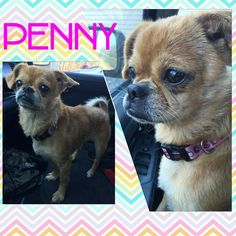 Meet Penny! She is even more cute in person. Check out our website for more info.