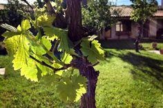 El jardín del Estudio Salamanca. Fotografía: Tuszapatosrojos