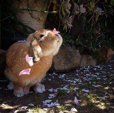 Bunny and petals :)
