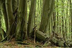 Zie jij door de bomen het bos niet meer?  Niemand kan alles alleen. Iedereen heeft soms een ander nodig.