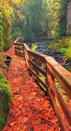 fall beauty....