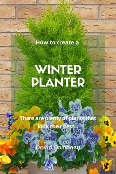 Revamp your planters with seasonal stunners this Christmas. It's a great way to make the garden more festive. Plus seasonal pots make great gifts too! There are plenty of plants that look their best right now, so there is no excuse for bare and boring containers. Winter Planter, Flower Pots, Flowers, Winter Christmas, Planters, Winter Colors, Winter Garden, Garden Design, Festive