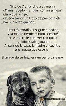 Dog my friend Animals Of The World, Animals And Pets, Cute Animals, Amor Animal, Mundo Animal, Love Pet, I Love Dogs, Yorkie, Chihuahua